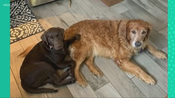 Doggone Weather: Franklin and Molly