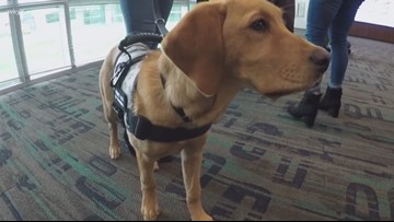 Roxy learns new commands in training to become Wags 4 Warriors service dog