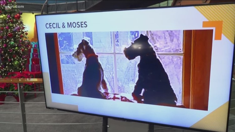 Doggone Weather: Cecil and Moses