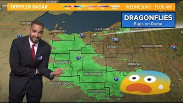 Thick swarm of dragonflies spotted on Northeast Ohio radar