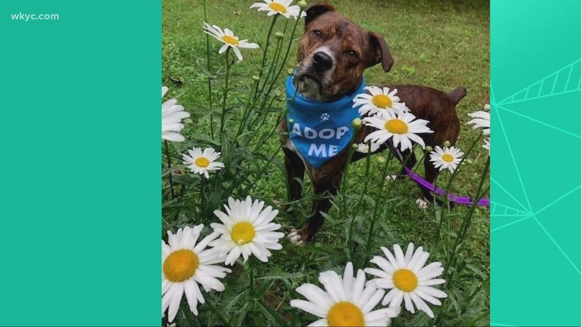 Adopt-A-Pet: Meet Peep, Dutch, & Brooklyn.