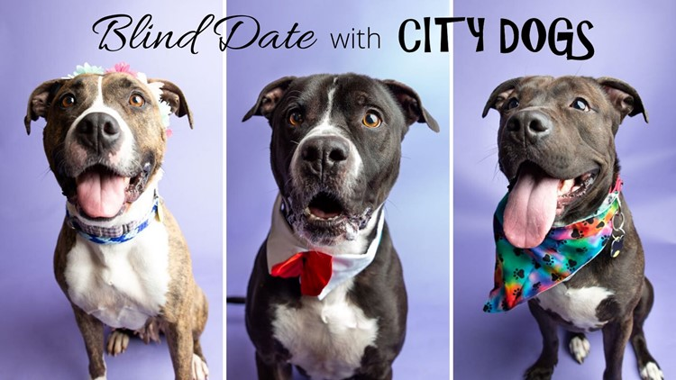 Blind Date all weekend with City Dogs
