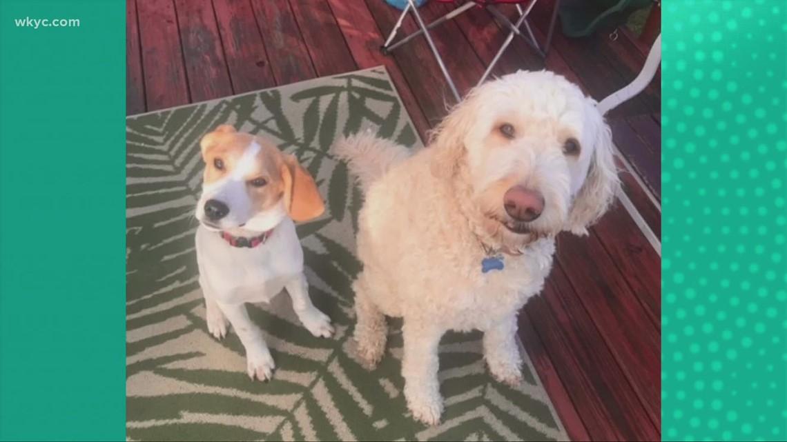 Doggone Weather: Willow & Benjamin.