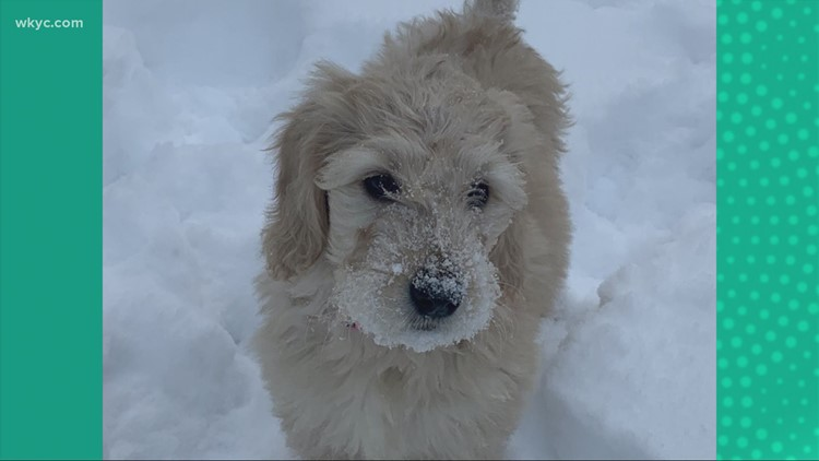 Doggone Weather:  Lulu