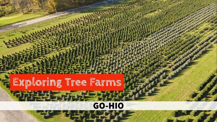 Here's where you can buy a real tree for Christmas in Northeast Ohio: GO-HIO
