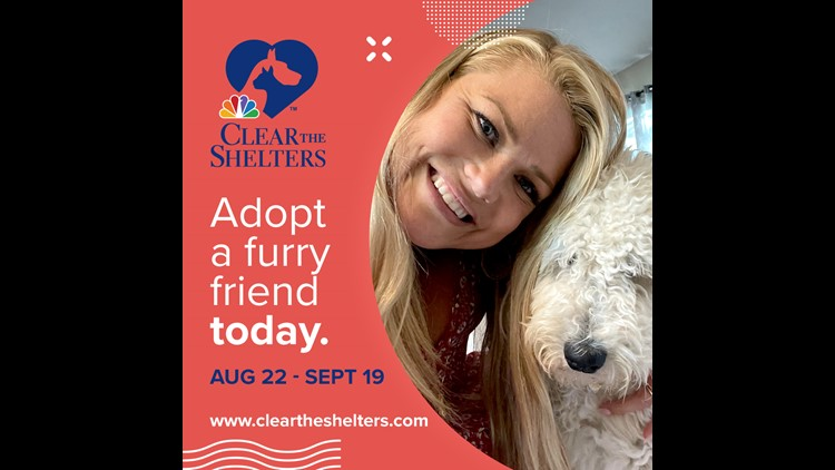 Summit County Animal Control drops price of dog and cat adoptions during Clear the Shelters drive
