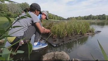 Girls in STEM | Learn how a floating wetland helps purify water