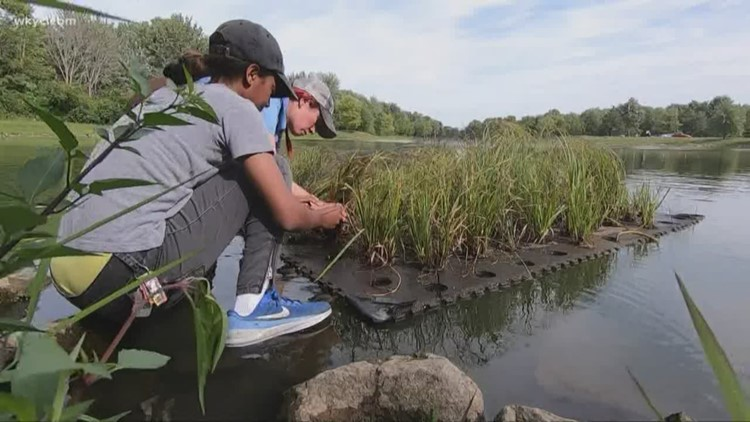 Girls in STEM   Learn how a floating wetland helps purify water