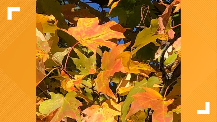 Are the leaves changing color near you? We want to see your pics!