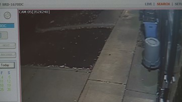 Surveillance video from VCA Great Lakes Veterinary Specialists shows cats being dumped behind facility