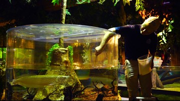HARDWORKING CLEVELAND | Inside the Tank at the Greater Cleveland Aquarium