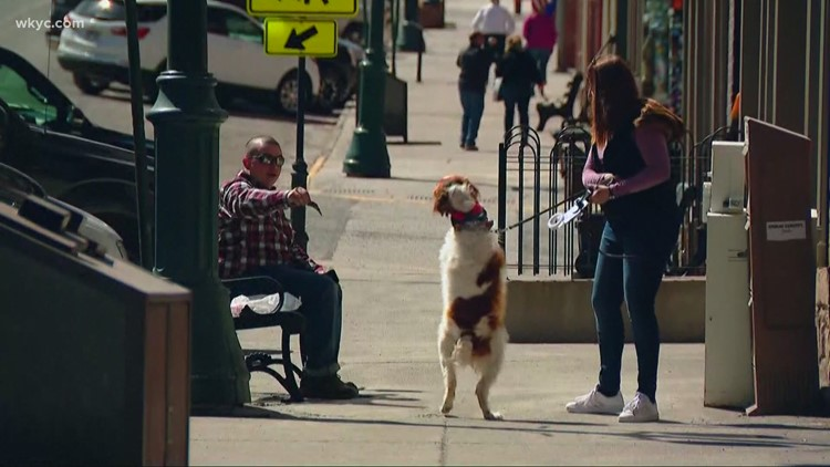 Check this out! This dog walks like a human after injuring his front paws