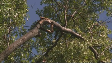 Here's what to to about damaged trees in or near your yard