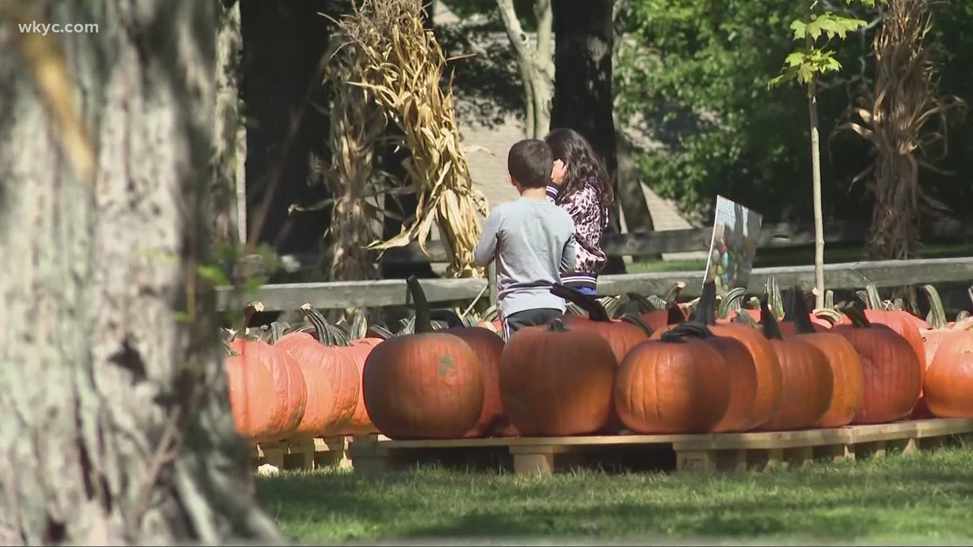 Halloween Events For Kids In Cleveland 2020 Laura DeMarco's 2020 Cleveland Halloween Guide | wkyc.com