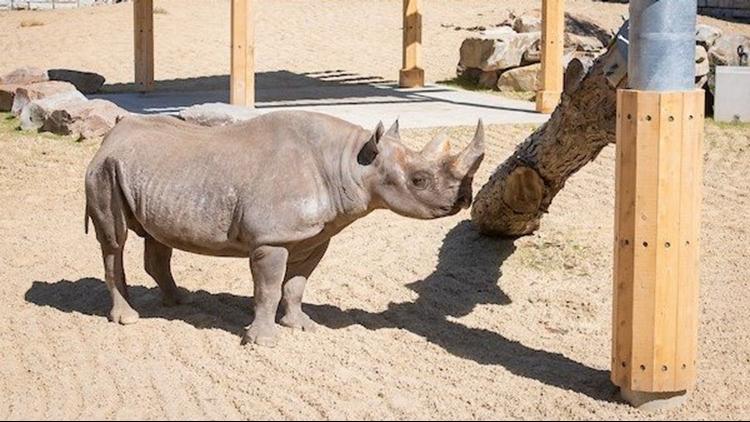 Cleveland Zoo unveils new rhino reserve