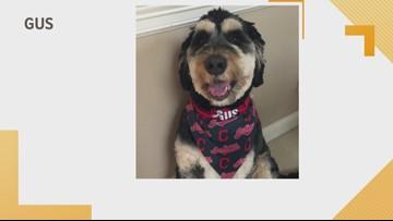 Doggone Weather: Gus