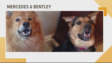Doggone Weather: Mercedes & Bentley