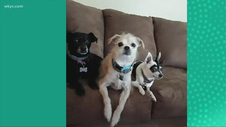 Doggone Weather:  Vivian, Jackson & Daisy