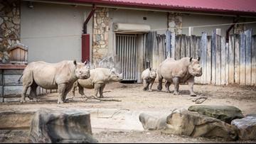 Cleveland Metroparks Zoo to expand rhinoceros habitat with Daniel Maltz Rhino Reserve