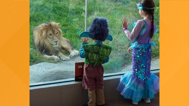 Akron Zoo announces return of