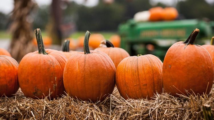 LIST   The best pumpkin patches in Northeast Ohio