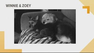 Doggone Weather: Winnie & Zoey