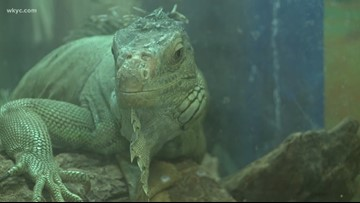 Reptile rescue: Herps Alive Foundation housing, rehabilitating more than 300 reptiles
