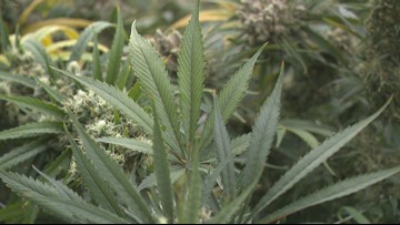 Vermilion to indefinitely stop enforcing marijuana possession cases