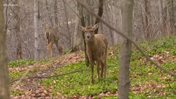 Deer mating season is upon us, but you can make it out unscathed
