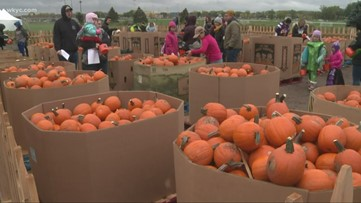What should you do with your pumpkins now that Halloween is over? This Northeast Ohio farm will take them