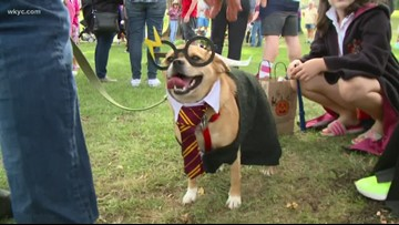 'Spooky Pooch Parade' to haunt Lakewood this weekend