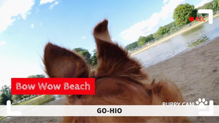 GO-HIO | A dog park with its own beach: Bow Wow Beach in Stow