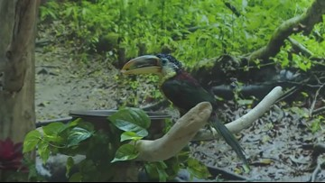 Exploring the updated Tropical Forest exhibit at the Greater Cleveland Aquarium