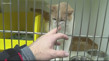 Hoarding cases prompt Cleveland APL to lower adoption fees