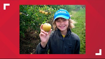 It's apple harvest time, but light crop limiting 'pick your own' opportunities