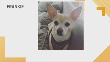 Doggone Weather: Frankie