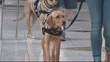 Incident at Lakewood Subway leads us to investigate what one's rights are when it comes to service dogs in public restaurants