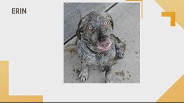 Doggone Weather: Erin