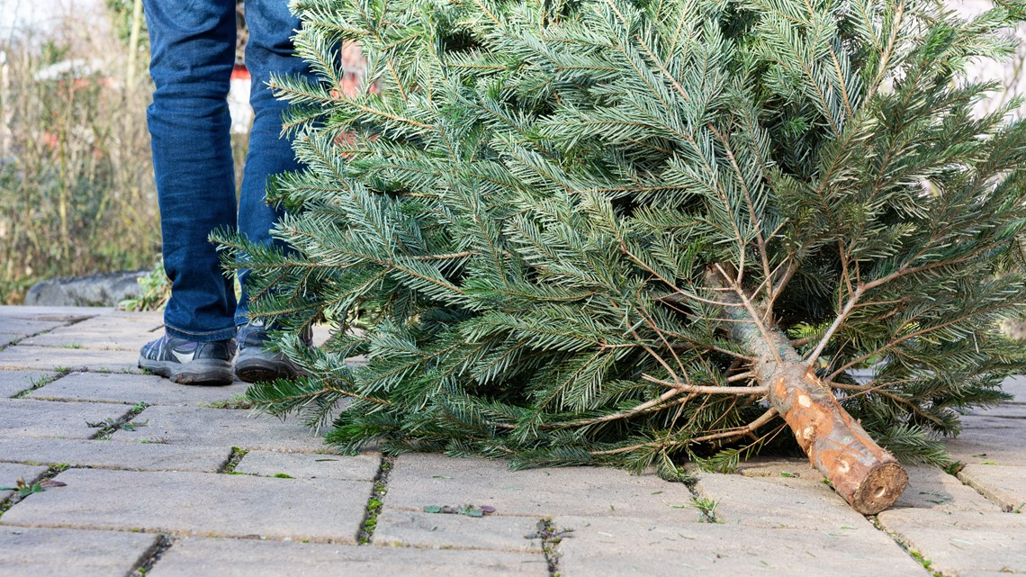 A greener holiday: Recycle your live Christmas tree