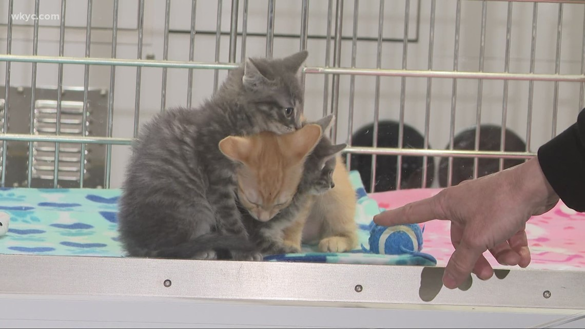 10th annual 3News' Fur-Get-Me-Not telethon has raised over $99,000 for Cleveland APL so far