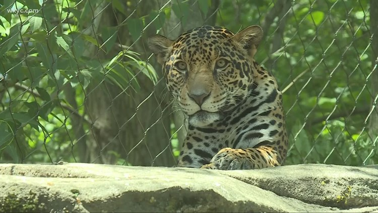 New safety measures in place for Akron Zoo guests