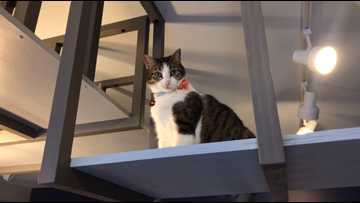 Cleveland's first cat cafe opens in Tremont