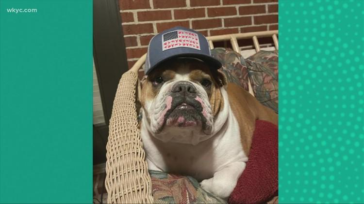 Doggone Weather:  Bentley