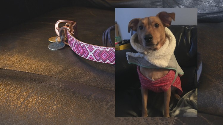 Geauga County kennel loses couple's dog days before wedding day