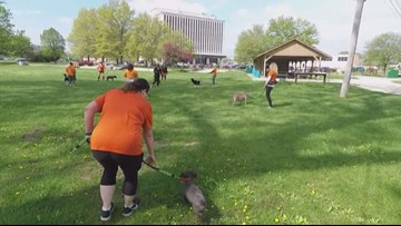 RunningDog gives shelter dogs a breath of fresh air