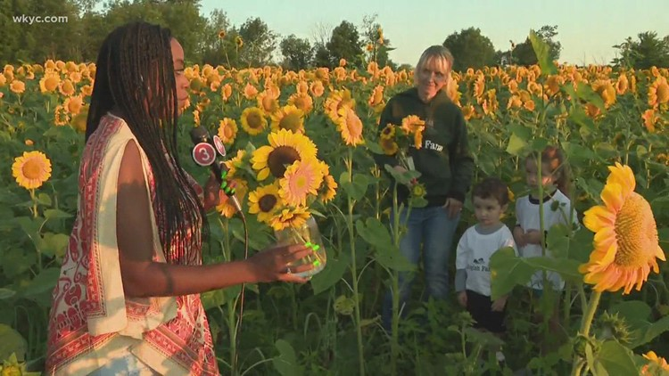 What you need to know about cutting your own sunflowers at Rogish Farm in Chesterland