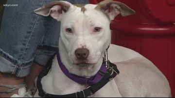 Adopt-A-Pet: Meet Riley from Lake Humane Society