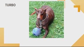 Doggone Weather:  Turbo