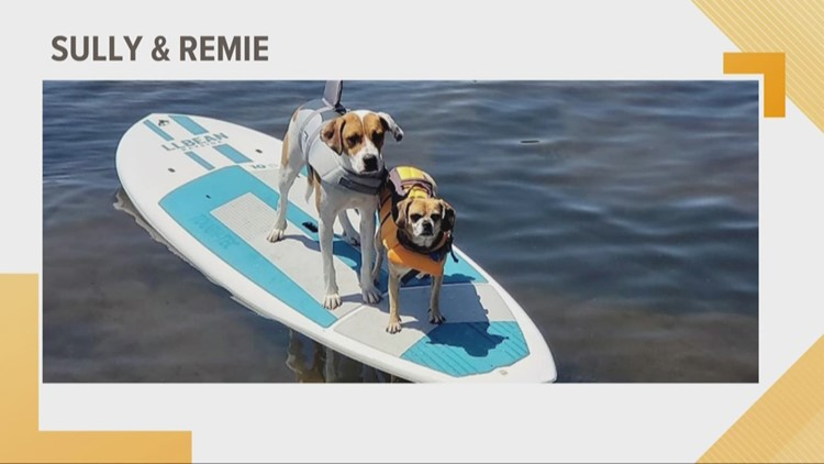 Doggone Weather:  Sully & Remie