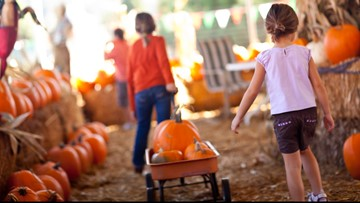 Northeast Ohio fall fun guide: Haunted houses, corn mazes and more